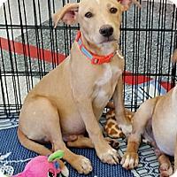 Adopt A Pet :: Edge - Phoenix, AZ