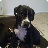 Adopt A Pet :: Milo - Tampa, FL