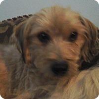 Adopt A Pet :: Clovis - Phoenix, AZ
