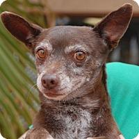 Adopt A Pet :: Bronze - Las Vegas, NV