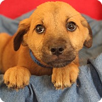 Adopt A Pet :: Thorn - Waldorf, MD
