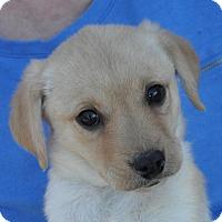 Adopt A Pet :: Kayla - Atlanta, GA