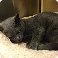 Adopt A Pet :: Ava - Colmar, PA