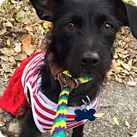 Adopt A Pet :: Freya - Houston, TX