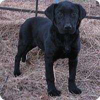 Adopt A Pet :: Magnum - Bedminster, NJ