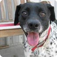 Pointer Mix Dog for adoption in Yukon, Oklahoma - Jed