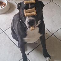 Adopt A Pet :: ARGOS - Chandler, AZ