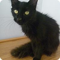 Adopt A Pet :: Kimberly - Hamburg, NY