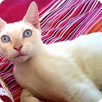 Adopt A Pet :: Frank - Orange, CA
