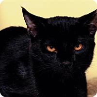 Adopt A Pet :: Max - Sedona, AZ