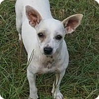 Adopt A Pet :: Melody - Montpelier, VT