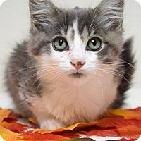 Adopt A Pet :: Emmett - Dublin, CA