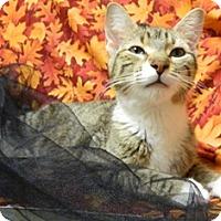 Adopt A Pet :: Lacey - Columbus, NE