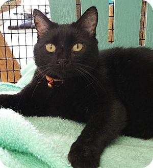 Cat Adoption Diamond Springs