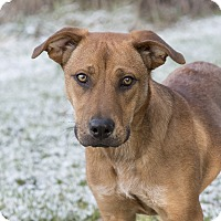 Adopt A Pet :: Carmella - Middletown, DE