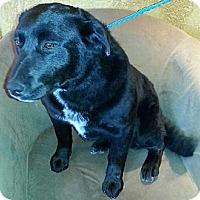Adopt A Pet :: Corona - River Falls, WI