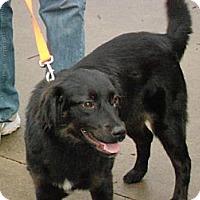 Adopt A Pet :: SASSY - Raleigh, NC