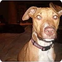 Adopt A Pet :: Casey - North Jackson, OH