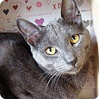 Adopt A Pet :: Leo - Albany, NY