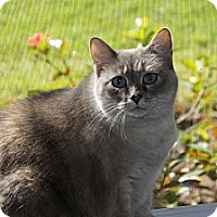 Adopt A Pet :: Emily aka Chubs - Bonita Springs, FL