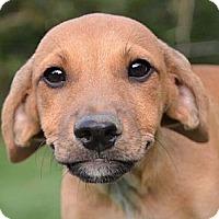 Adopt A Pet :: Hank - Ocala, FL