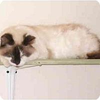 Adopt A Pet :: Sun Kwon - San Ramon, CA