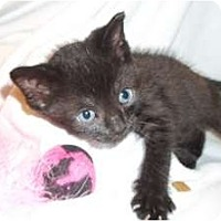 Adopt A Pet :: Tango - Acme, PA