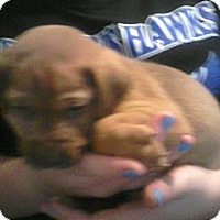Adopt A Pet :: Trevor - Huntsville, TN