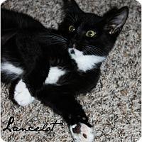 Adopt A Pet :: Lancelot - McKinney, TX