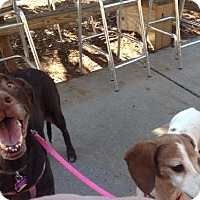 Adopt A Pet :: FOSTER HOMES NEEDED - Charleston, SC