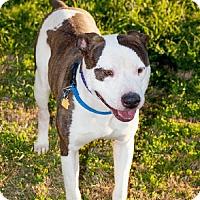 Adopt A Pet :: Keats - Las Vegas, NV