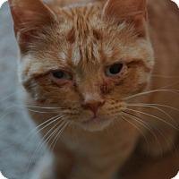 Adopt A Pet :: Rajah - St. Louis, MO