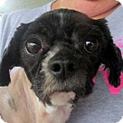 Adopt A Pet :: Pandy