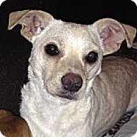 Adopt A Pet :: Pixie - Allentown, PA