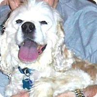 Adopt A Pet :: Alistaad - Phoenix, AZ