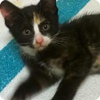 Adopt A Pet :: Marbles - Berkeley Hts, NJ