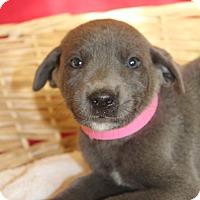Adopt A Pet :: Simone - Waldorf, MD