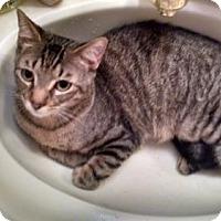 Adopt A Pet :: Ringo - Cypress, TX