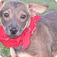 Adopt A Pet :: Ernie- super sweet baby boy! - New Hartford, CT