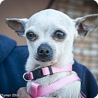 Adopt A Pet :: Sky - San Marcos, CA