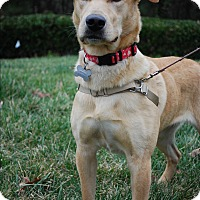 Adopt A Pet :: Barbie - Richmond, VA