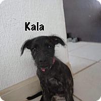 Adopt A Pet :: KALA - Calgary, AB