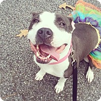 Adopt A Pet :: Piper - Atlanta, GA