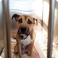 Adopt A Pet :: Kosmo - Elyria, OH