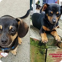 Adopt A Pet :: Wishbone & Chauncey in PA - Columbia, TN