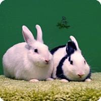 Adopt A Pet :: Marbles - Montclair, CA