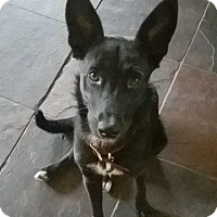 Adopt A Pet :: Maisey - Tucson, AZ