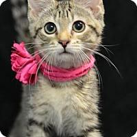 Adopt A Pet :: Victoria160897 - Atlanta, GA