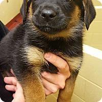 Adopt A Pet :: Farrah - Accident, MD