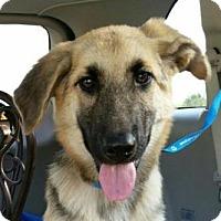Adopt A Pet :: Ray J - Kansas City, MO